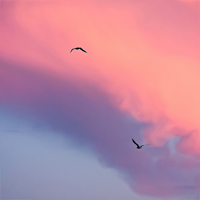 Up and down in pink, Riccione, 2008